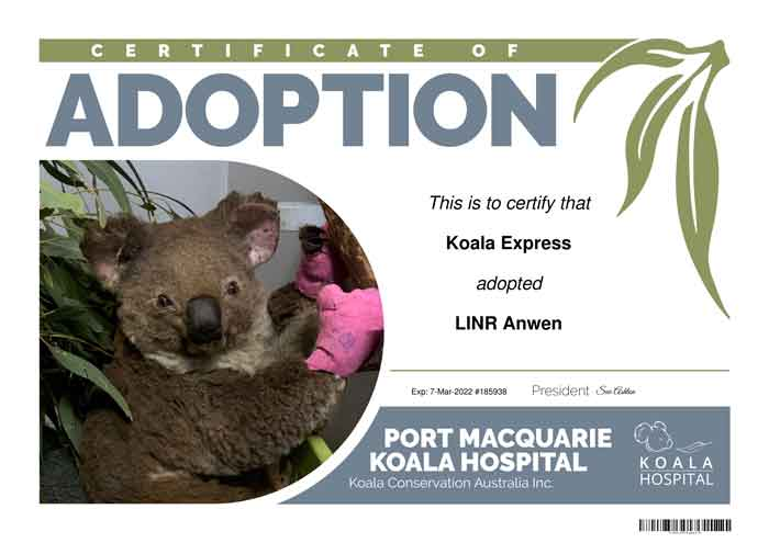 Anwen Koala Port Macquarie Koala Hospital Adoption Certificate